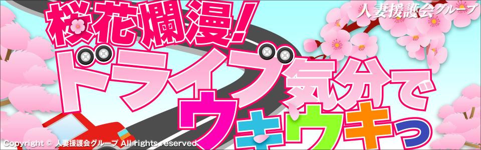 桜花爛漫!ドライブ気分でウキウキっ