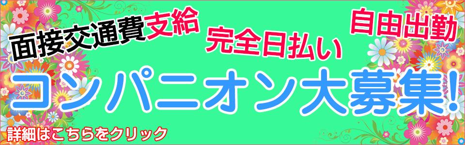 コンパニオン大募集!!