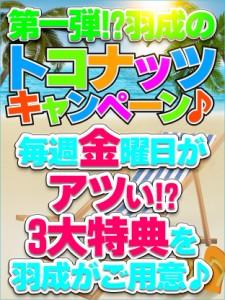 ★本日開催★第一弾⁉ 羽成のトコナッツキャンペーン♪